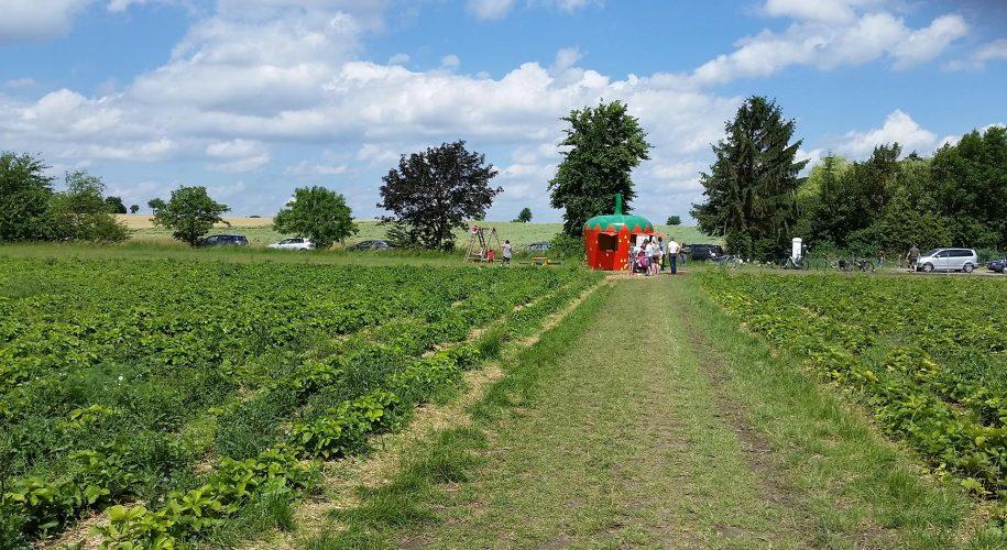 Das Erdbeerfeld mit Verkaufsstand